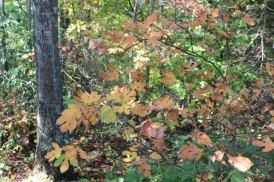 Arboretum (10/11/17)